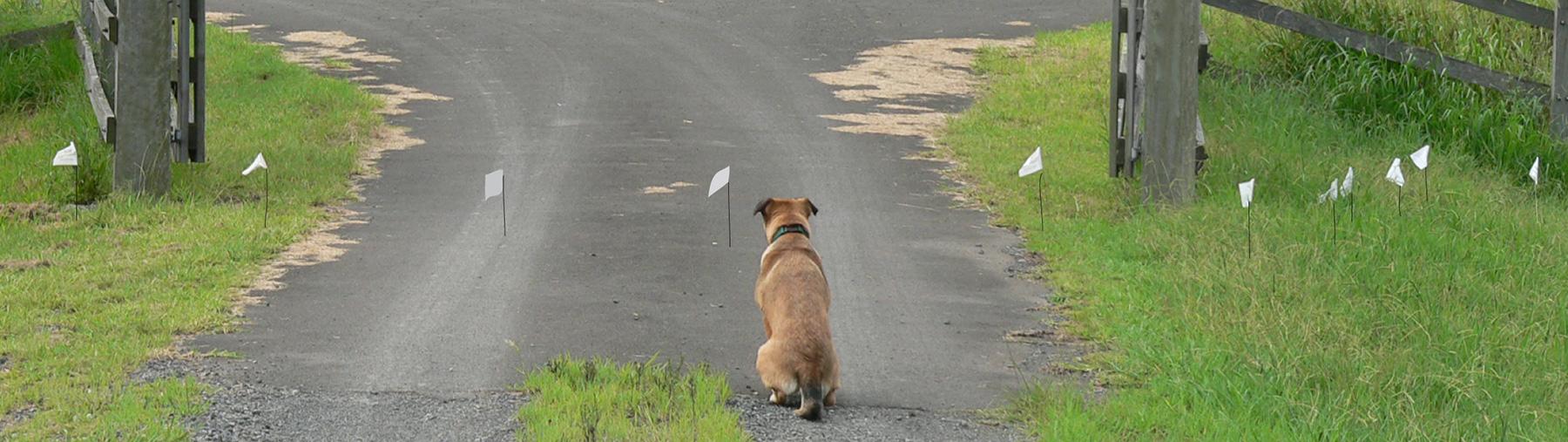 installation-of-hidden-dog-fence