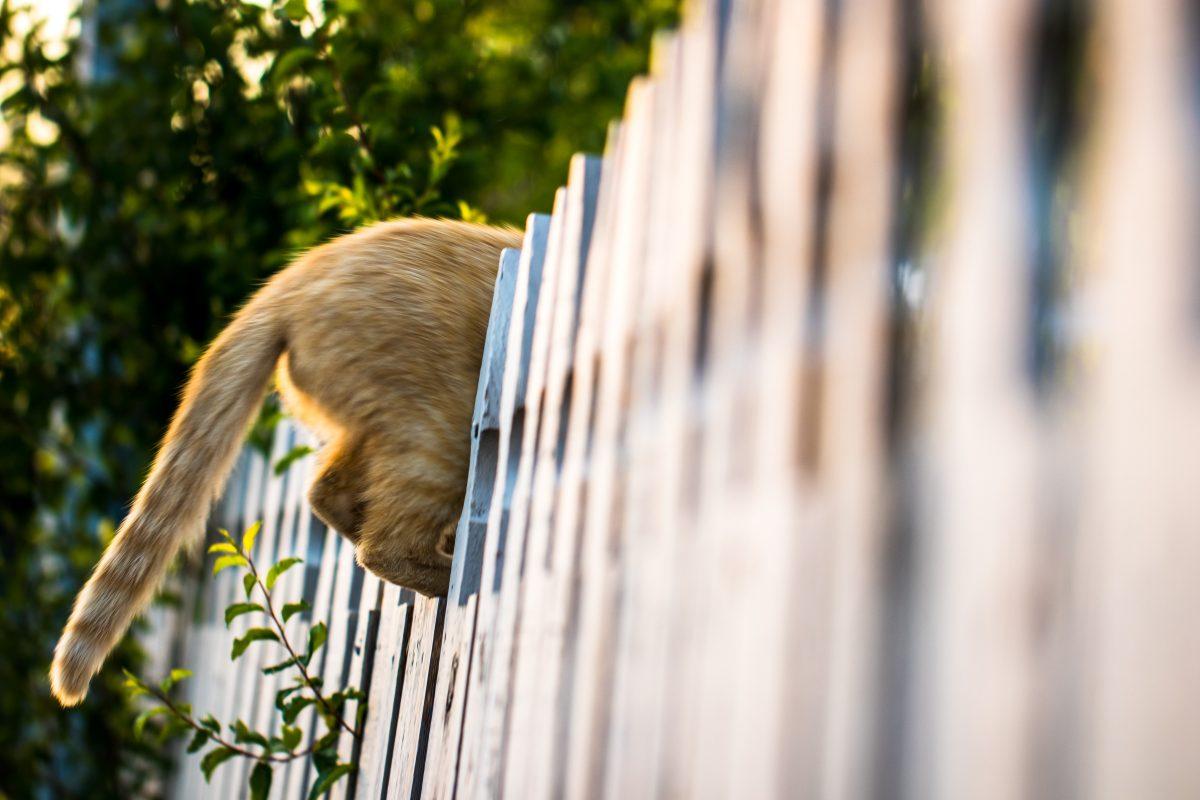 Cat escaping yard. - DIY Cat Fence