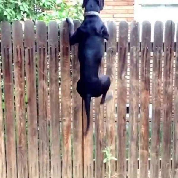 diy-dog-fence